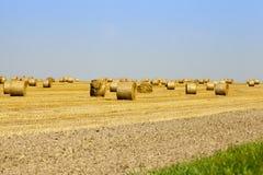 тюкует золотистое сено Стоковые Фото