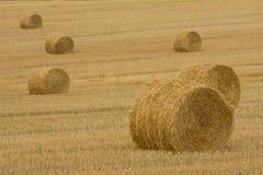 тюкует золотистое сено Стоковое Изображение RF