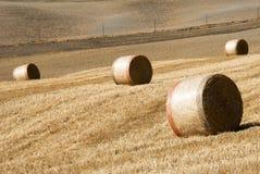 тюкует золотистое сено Стоковая Фотография