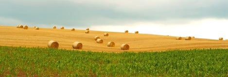 тюкует пшеницу Стоковое Изображение RF