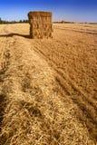 тюкует свежее сено Стоковая Фотография