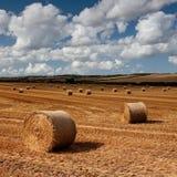тюкует сено Великобританию dorset Стоковые Изображения RF