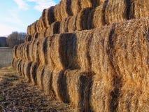 тюкует сено поля фермы Стоковое Изображение RF