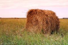тюкует сено поля хуторянин Стоковые Фотографии RF