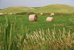 тюкует сено сельскохозяйствення угодье Стоковая Фотография