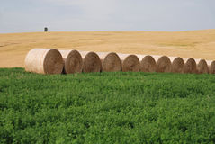 тюкует сено сельскохозяйствення угодье Стоковое Фото