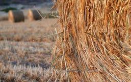 тюкует сено harve круглое Стоковые Фотографии RF