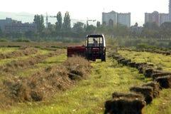 тюкуя сено поля Стоковые Фото