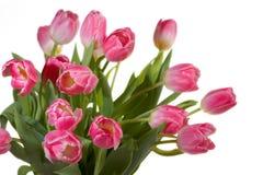 тюльпаны весны букета Стоковые Изображения