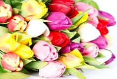 тюльпаны весны цветастых цветков свежие Стоковое Фото