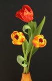 тюльпаны весны Стоковые Изображения RF
