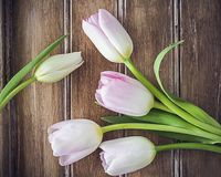 Тюльпаны времени весны стоковое изображение rf