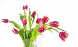 Тюльпаны в вазе стоковые фотографии rf