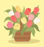 Тюльпаны в корзине Стоковое Фото