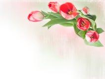тюльпаны граници цветастые Стоковое фото RF