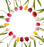 Тюльпаны другого цвета в форме круга Стоковое Фото