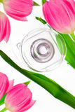тюльпаны дух бутылки окруженные пинком Стоковые Фотографии RF