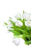 тюльпаны изолированные букетом белые Стоковые Изображения RF