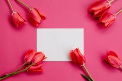 Тюльпаны и белый лист бумаги стоковое фото rf
