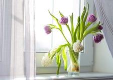 Тюльпаны и гиацинты на окне Стоковые Фотографии RF