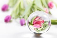 тюльпаны и отражение в стеклянном шаре Стоковая Фотография