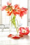 тюльпаны красивейшего молока бутылки старые Стоковое Изображение RF