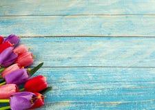 Тюльпаны на голубой деревянной предпосылке стоковые изображения rf