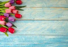 Тюльпаны на голубой деревянной предпосылке стоковое изображение rf