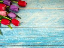 Тюльпаны на голубой деревянной предпосылке стоковая фотография