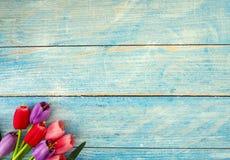 Тюльпаны на голубой деревянной предпосылке стоковое изображение