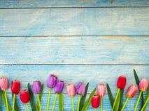 Тюльпаны на голубой деревянной предпосылке стоковое фото