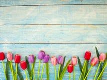 Тюльпаны на голубой деревянной предпосылке стоковые фотографии rf