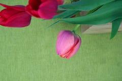 Тюльпаны на зеленой предпосылке Стоковые Изображения RF