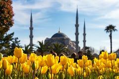 Тюльпаны от Стамбула во время фестиваля тюльпана, в регионе Sultanahmet стоковые изображения