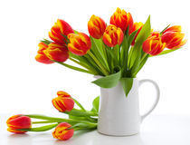 тюльпаны предпосылки красные белые Стоковое Изображение