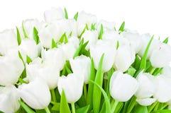 тюльпаны предпосылки Стоковые Изображения RF