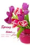 тюльпаны пука розовые пурпуровые стоковая фотография