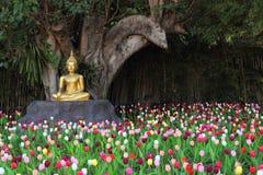 тюльпаны сада Будды Стоковое Изображение RF