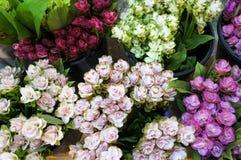 Тюльпаны Сиама подготавливают для продажи стоковое фото
