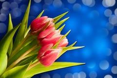 Тюльпаны с зелеными листьями Стоковые Фото