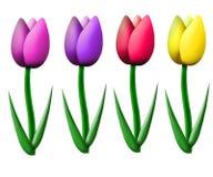 тюльпаны иллюстрация штока