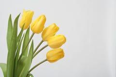 тюльпан букета Стоковые Фотографии RF