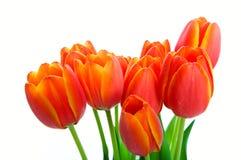 тюльпан весны букета Стоковые Изображения RF