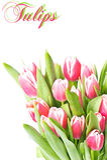 тюльпан весны цветков розовый Стоковая Фотография