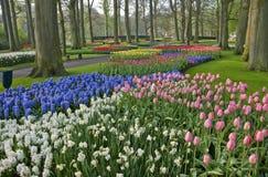 тюльпан весны keukenhof сада Стоковые Фотографии RF
