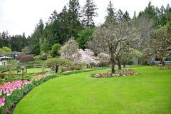 Тюльпан в садах Butchart Виктория ДО РОЖДЕСТВА ХРИСТОВА стоковые фотографии rf