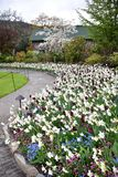 Тюльпан в садах Butchart Виктория ДО РОЖДЕСТВА ХРИСТОВА стоковая фотография rf