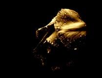 тюльпан дождя 4 стоковое фото