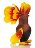 тюльпан красного цвета бака глины изолированный цветком Стоковая Фотография RF
