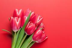 тюльпан 01 красного цвета Стоковые Изображения